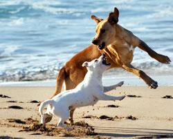 Honden op het strand van Noordwijk
